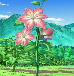 250px-Gracidea_flower_anime.png