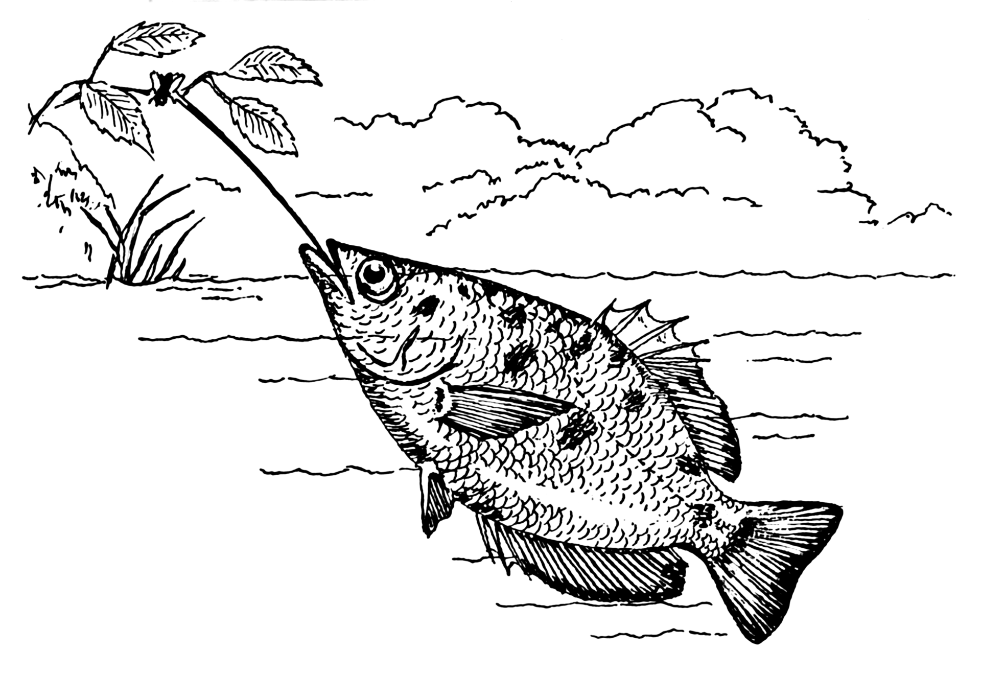An archerfish shooting a fly off a plant